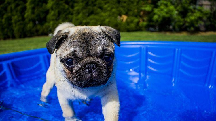 Picture of dog in paddling pool.