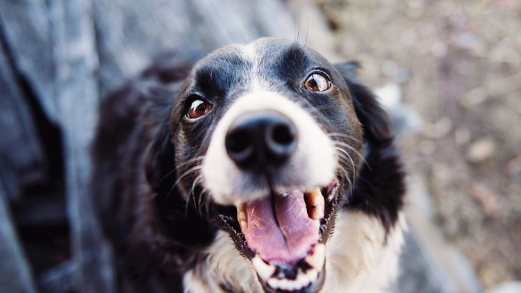 Featured image for the how to freshen dogs breath article.