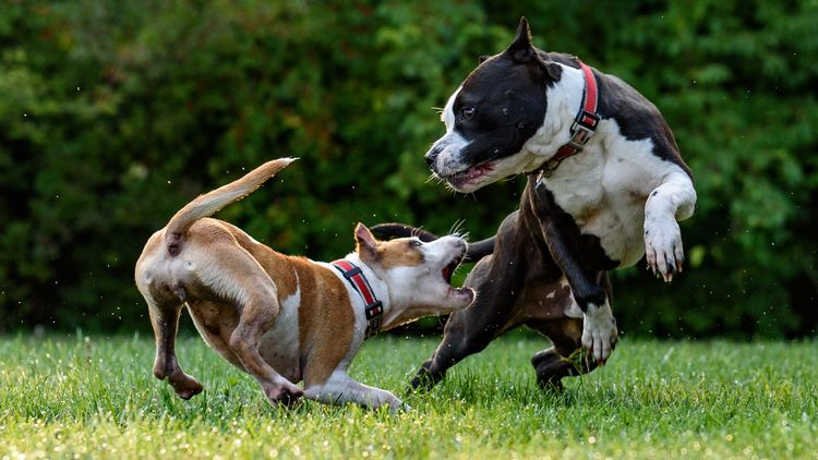 Picture of dogs playing.