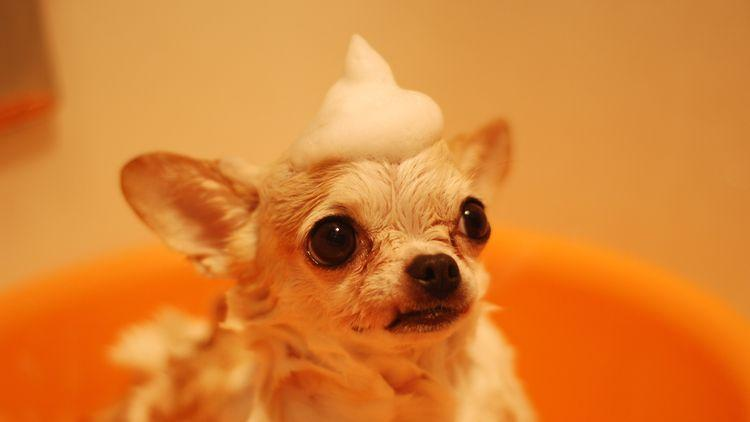 Featured image for the best dog conditioners article.