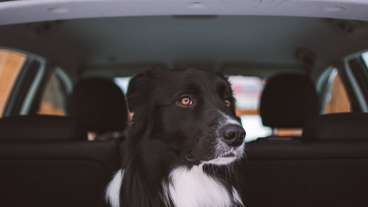 Featured image for the Best Dog Seat Cover article.