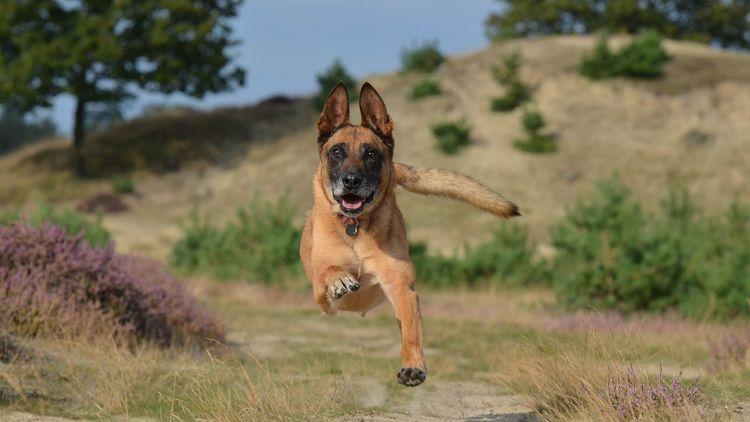 Picture of a dog running in mid-air.