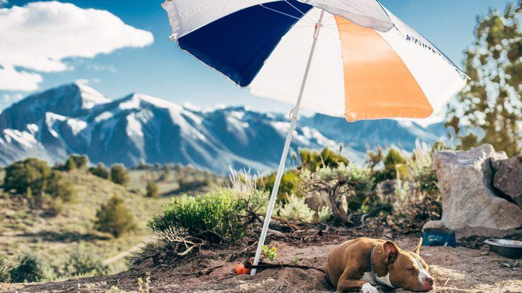 Picture of a dog laying under an umbrella.