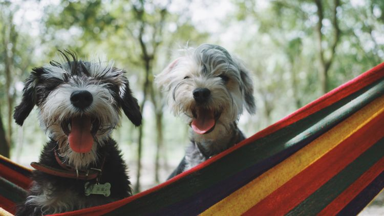 Picture of happy dogs.