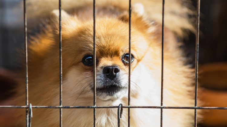 Picture of a dog in crate.