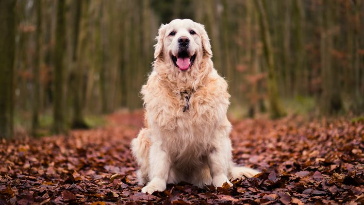 Picture of a dog in forest.