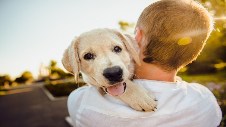 Featured image for the how to make dogs happy article.