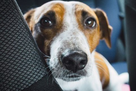Featured image for the 6 signs that your dog has fleas article.