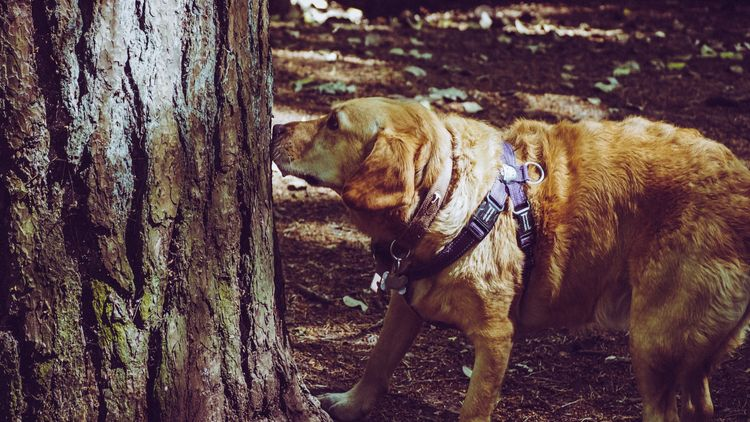 Picture of a dog sniffing a tree.