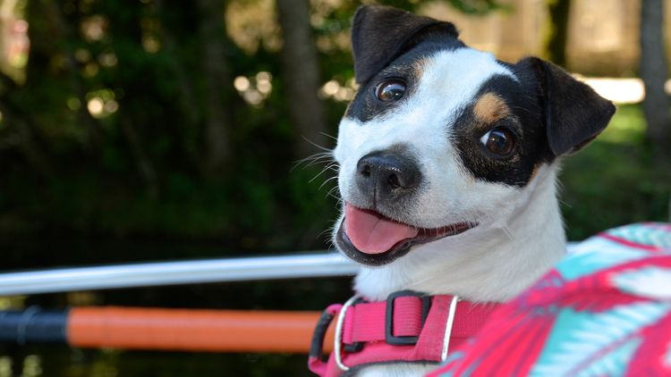 Featured image for the Best No Pull Dog Harness article
