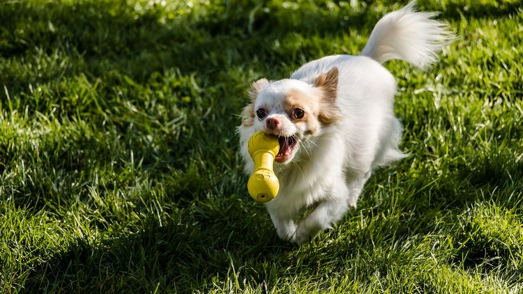 Featured image for the best dog toys for chewers article