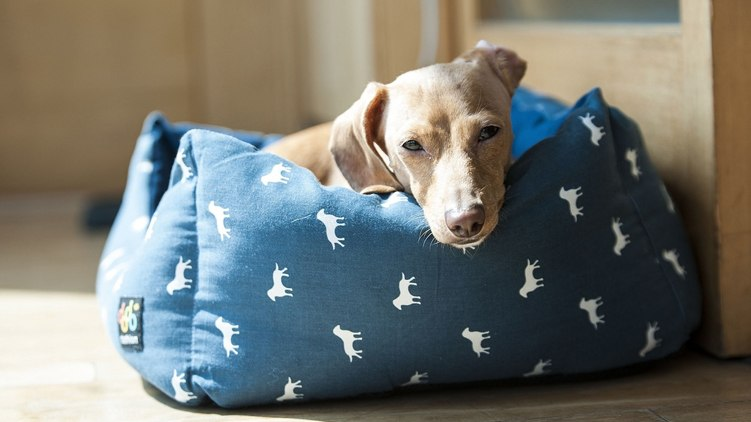 best dog bed for chewers featured image.