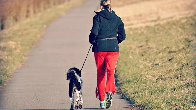 best-dog-leash-for-running-featured-image