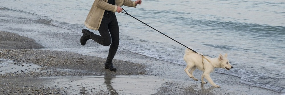dog running on a leash